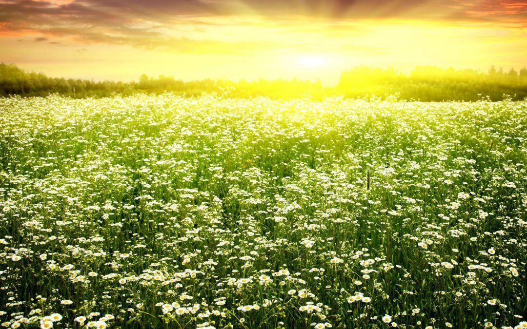 """""""Que tu corazón sea el sol que brilla"""""""